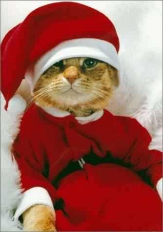 http://www.humour-blague.fr/blagues/c-est-noel-!-meme-pour-les-chats....jpg